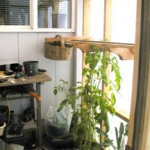 right-side-greenhouse
