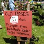 plant-sale-roses
