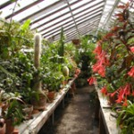 Inside the Bush Garden Greenhouse