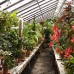 Inside the Bush Garden Greenhouse