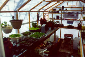 Inside a Solexx Gable Greenhouse.