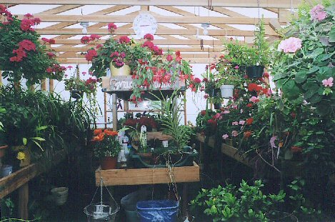 Inside view of customers Solexx Greenhouse.