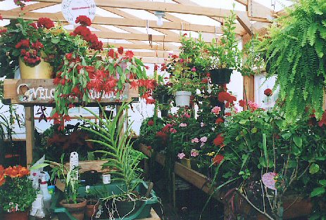 Inside view of customers Solexx Greenhouse full of flowers.